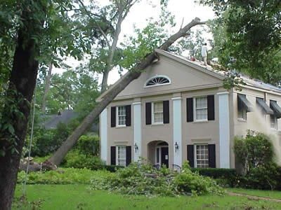 Do You Have Roof Damage From a Tree in Miramar?