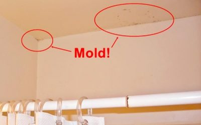 Is There Mold in Your Port Saint Joe Home?